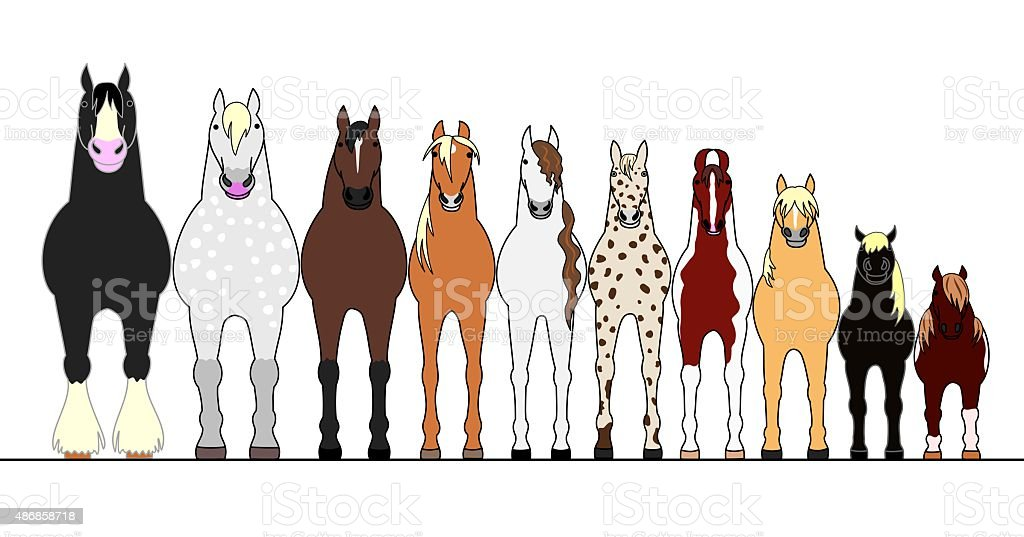 various horses lining up in height order vector art illustration