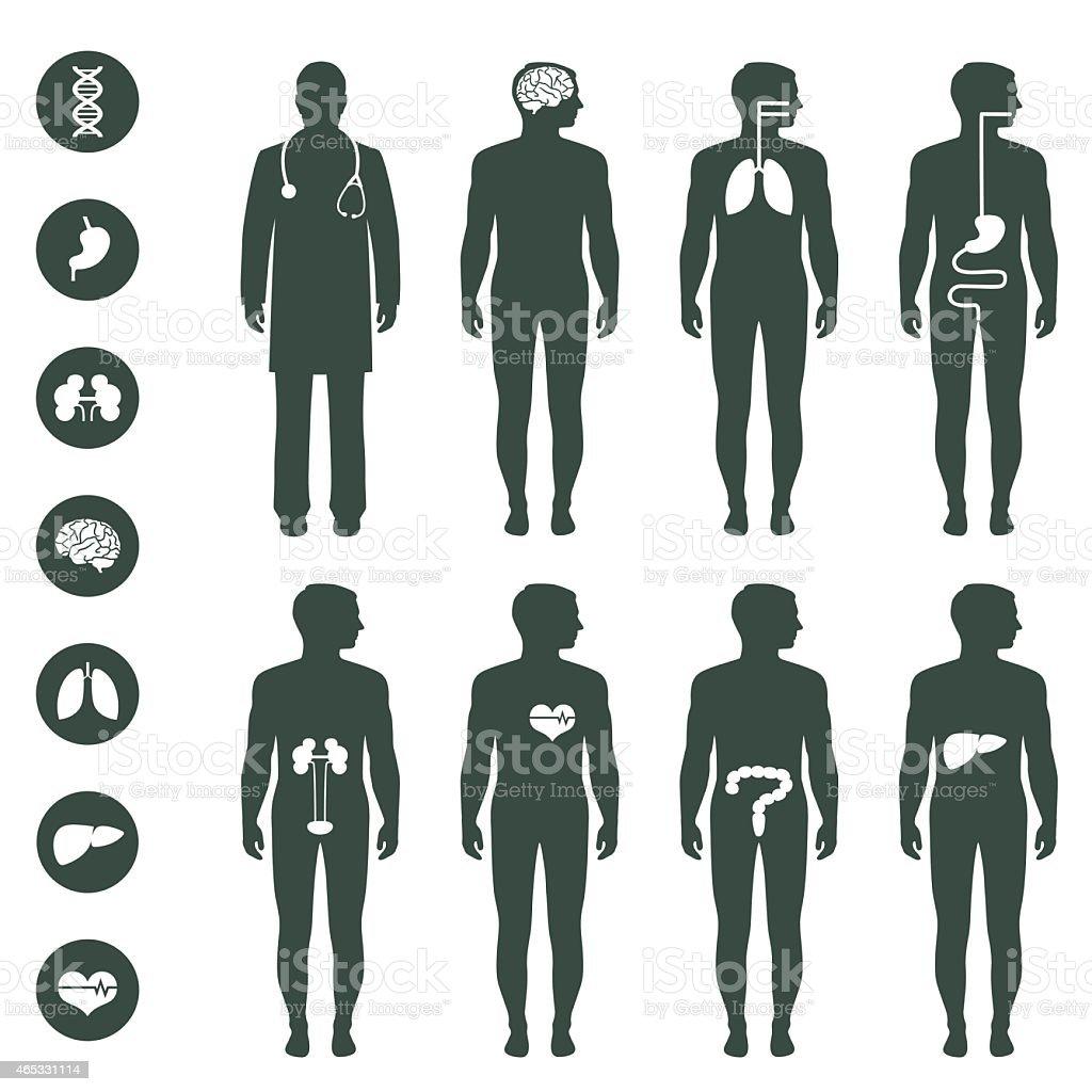 Menschlichen Körper Anatomie Vektor Illustration 465331114 | iStock