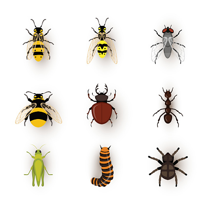 Various insects flat vector illustrations set