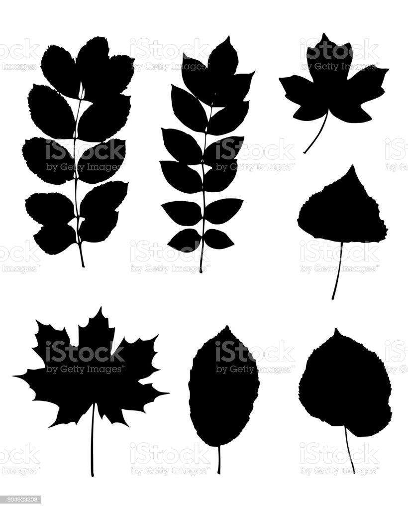 Various leaves vector art illustration