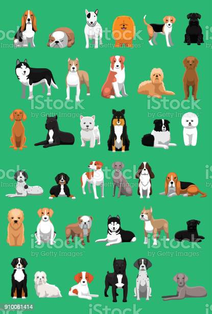 Various medium size dog breeds cartoon vector illustration vector id910061414?b=1&k=6&m=910061414&s=612x612&h=z41eufa0wk1dlhgmgh3f1oaxp1qra 6hvqhbqczh8v4=