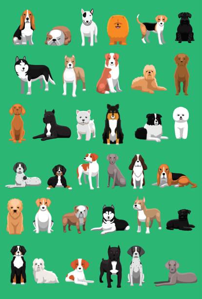 Various Medium Size Dog Breeds Cartoon Vector Illustration Animal Cartoon EPS10 File Format sheepdog stock illustrations