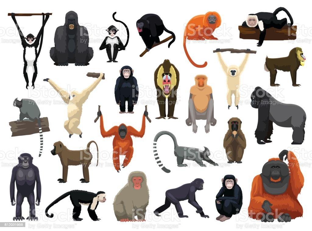 Varias Poses Vector ilustración del mono - ilustración de arte vectorial
