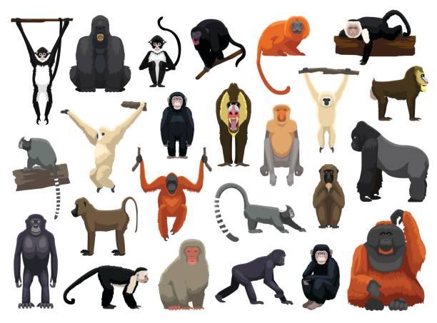 various monkey poses vector illustration - gorilla stock illustrations