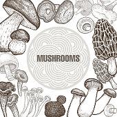 Various mushrooms. Poster.
