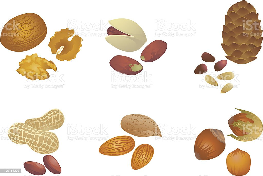 Various nuts vector art illustration