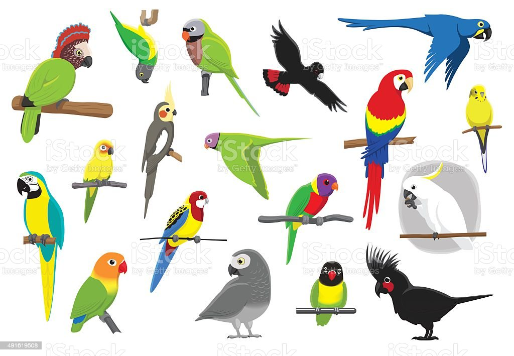 Various Parrots Cartoon Vector Illustration vector art illustration