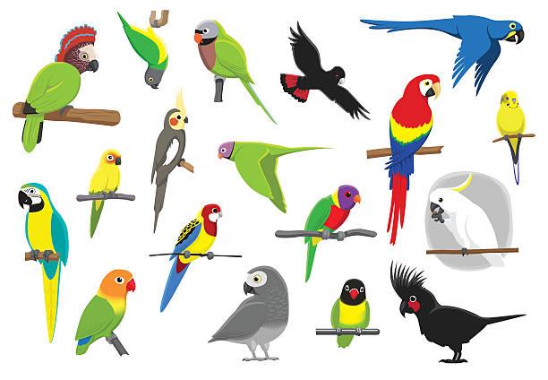 ilustrações de stock, clip art, desenhos animados e ícones de vários papagaios rapaz ilustração vetorial - arara