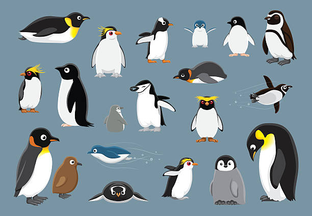penguins cartoon vektor-illustration der verschiedenen - pinguin stock-grafiken, -clipart, -cartoons und -symbole