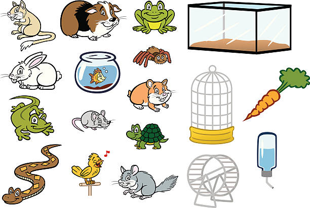 various pet store animals and cages - amphibians stock illustrations