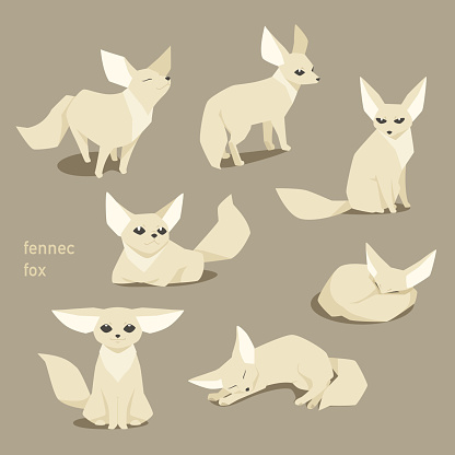Various positions of a cute desert fox.