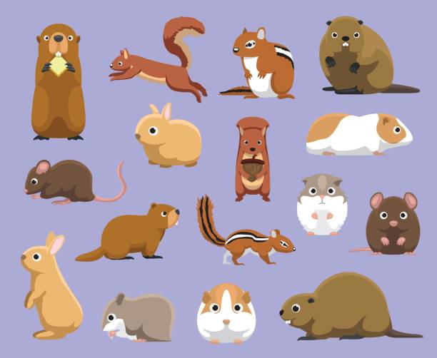 Various Rodents Cartoon Vector Illustration Animal Character EPS10 File Format beaver stock illustrations