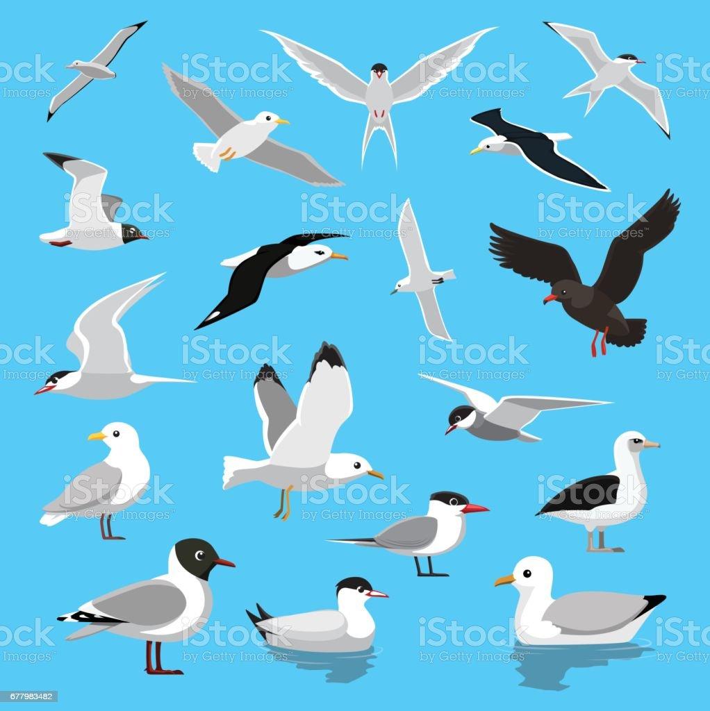 Various Seagull Tern Albatross Cartoon Vector Illustration vector art illustration