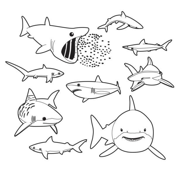 Various Sharks Cartoon Vector Illustration Monochrome Animal Cartoon EPS10 File Format great white shark stock illustrations