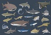 Various Sharks Set Cartoon Vector Illustration