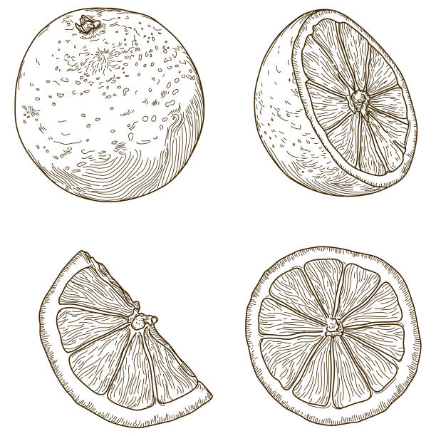 Various Sliced Oranges vector art illustration