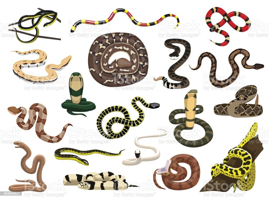 Various Snakes Poses Vector Illustration vector art illustration