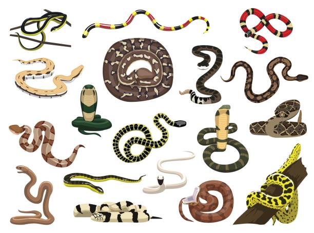 various snakes poses vector illustration - snake stock illustrations, clip art, cartoons, & icons