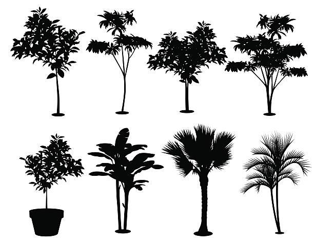 Various Trees Silhouettes vector art illustration