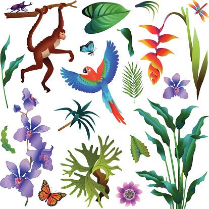 various tropical Amazon rainforest plants and animals