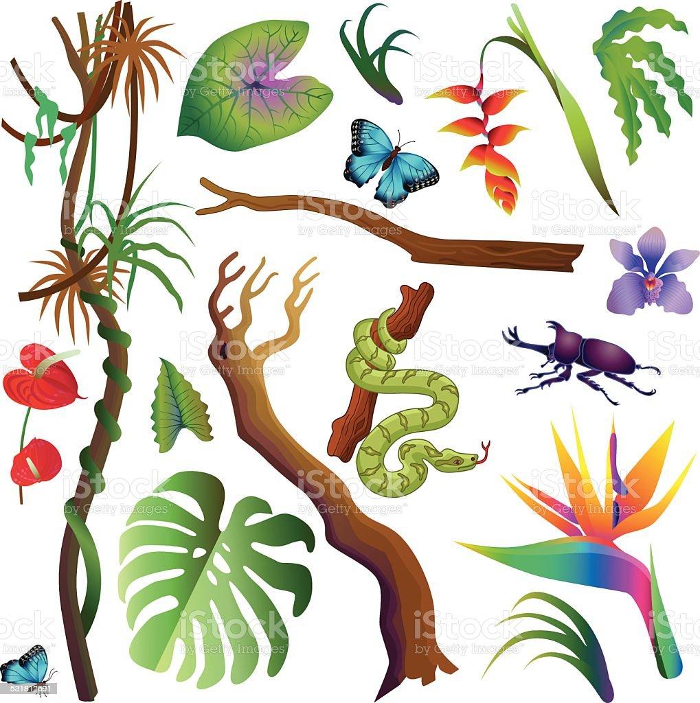 さまざまな熱帯植物や動物のアマゾン熱帯雨林 のイラスト素材