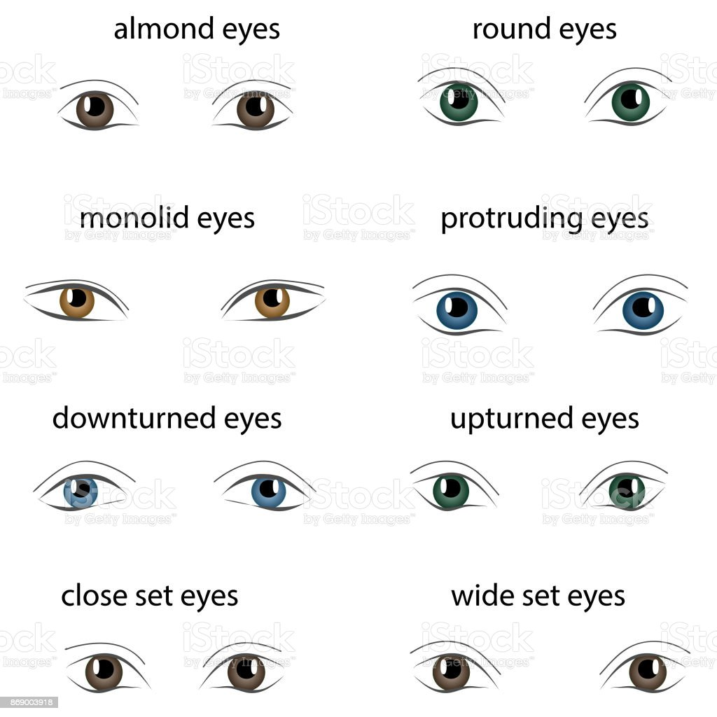 Various Types Of Woman Eyes On White Background Set Of Different