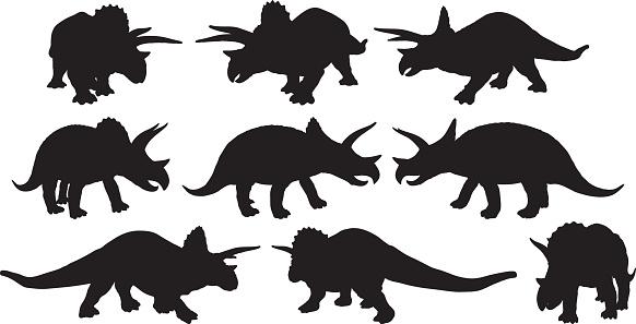 Various views of dinosaur