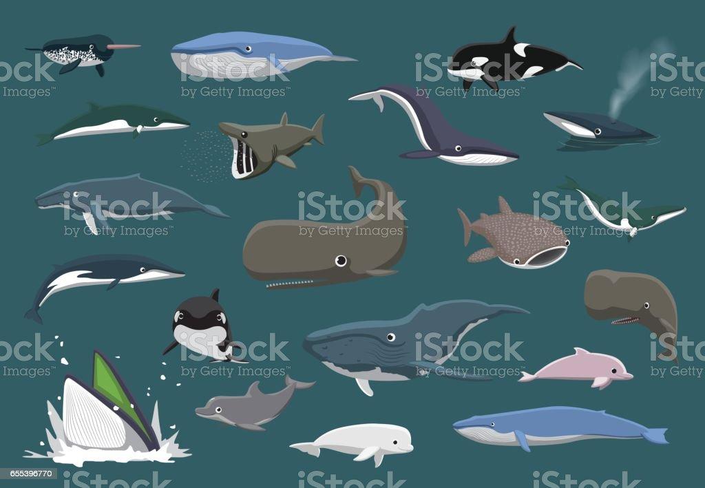 Verschiedene Wale Set Cartoon-Vektor-Illustration – Vektorgrafik