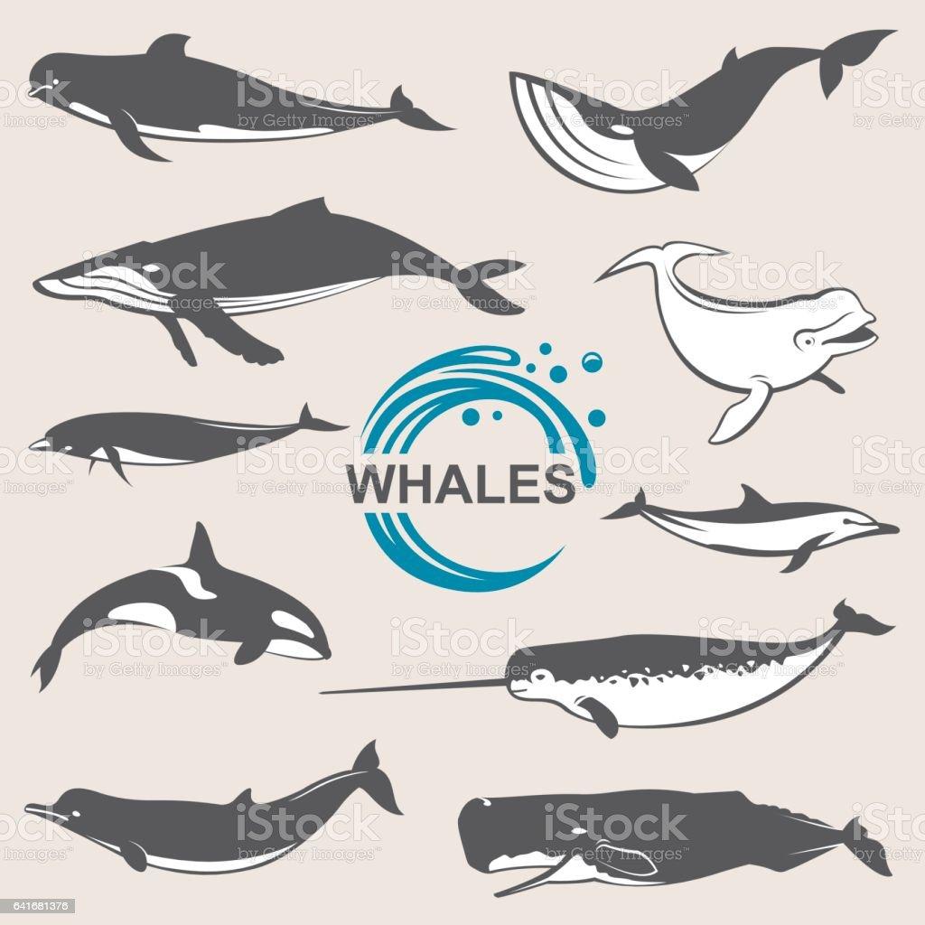 Legen Sie verschiedene Wale – Vektorgrafik