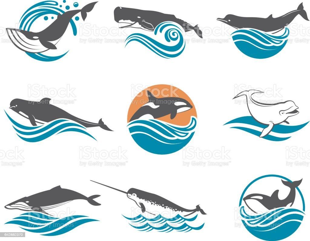 divers ensemble de baleines - Illustration vectorielle