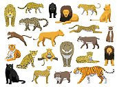 Various Wild Cat Panthera Vector Illustration