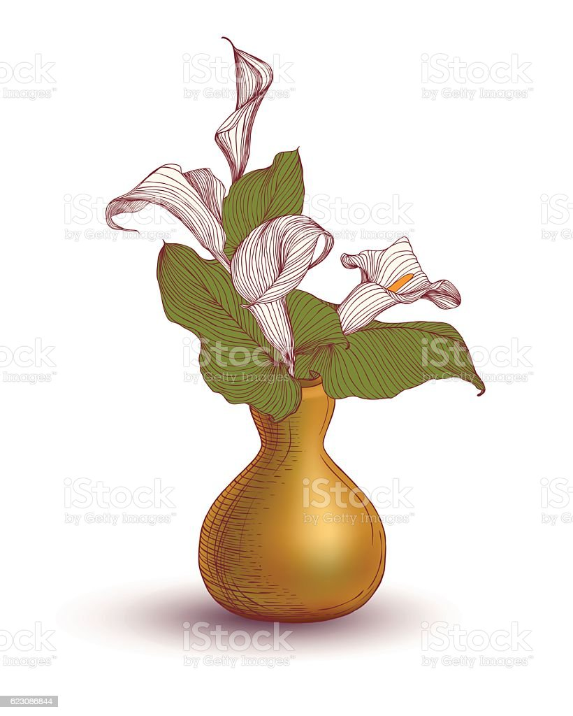 Vase With Calla Lily Flowers Stock Vector Art More Images Of Art