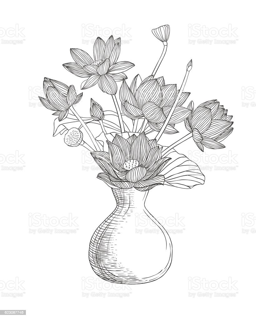 Vase with lotus flowers linear illustration stock vector art more vase with lotus flowers linear illustration royalty free vase with lotus flowers linear illustration izmirmasajfo