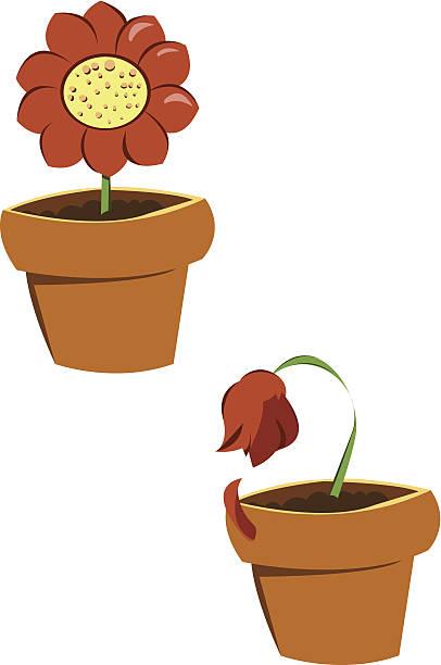 ilustrações de stock, clip art, desenhos animados e ícones de n.e de flores - planta morta