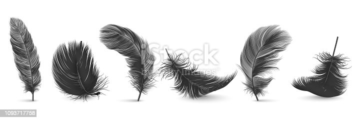 Vector 3d Realistic Different Falling Black Fluffy Twirled Feather Set Closeup Isolated on White Background. Design Template, Clipart of Angel or Bird Detailed Feather in Various Shapes.