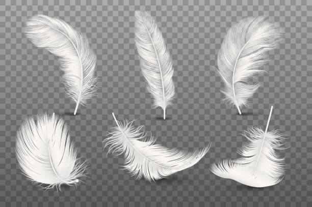 Vector 3d Realistic Different Falling White Fluffy Twirled Feather Set Closeup Isolated on Transparency Grid Background. Design Template, Clipart of Angel or Bird Detailed Feather in Various Shapes Vector 3d Realistic Different Falling White Fluffy Twirled Feather Set Closeup Isolated on Transparency Grid Background. Design Template, Clipart of Angel or Bird Detailed Feather in Various Shapes. feather stock illustrations