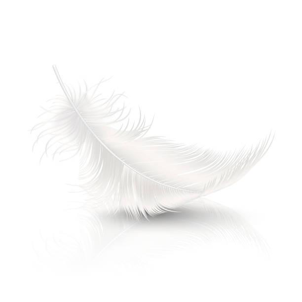 wektor 3d realistyczne falling white fluffy twirled feather z odbiciem closeup izolowane na białym tle. szablon projektu, clipart anioła lub szczegółowe bird quill - pióro przyrząd do pisania stock illustrations