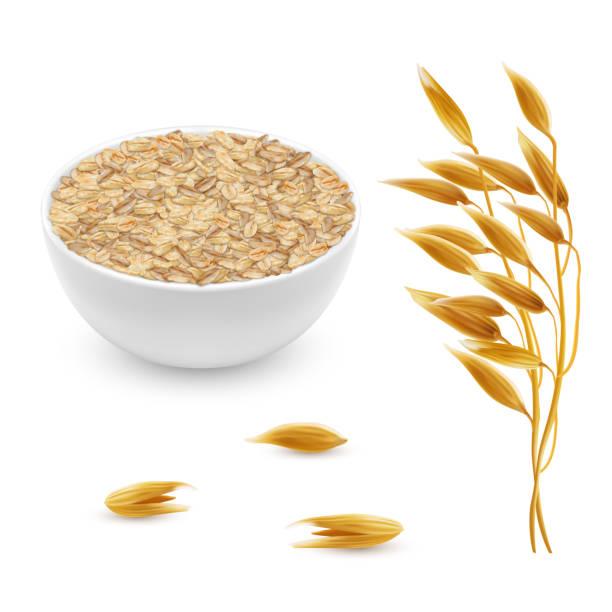 ilustrações de stock, clip art, desenhos animados e ícones de vector 3d realistic oat ears, grains, bowl - ilustrações de oats