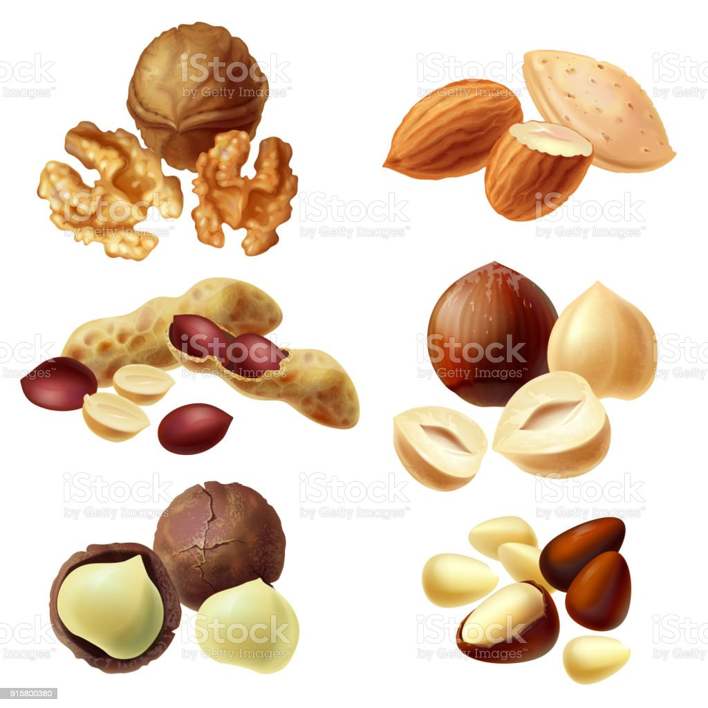 Vector 3d realistic set of various nuts vector art illustration