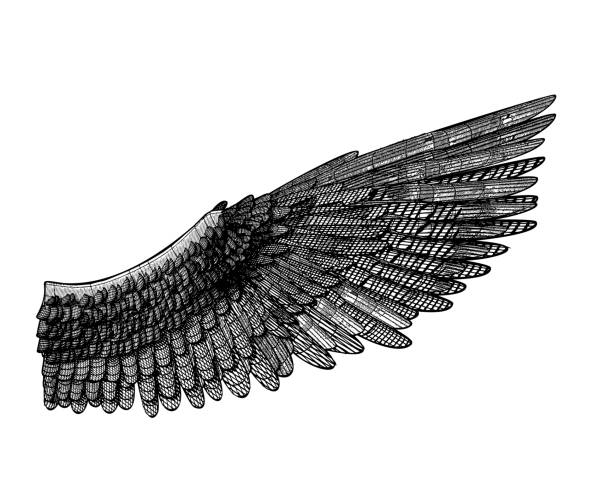 Vector 3D wireframe wing illustration on white BG Wing and feather vector 3D wireframe line art monochrome drawing illustration isolated on white background animal limb stock illustrations