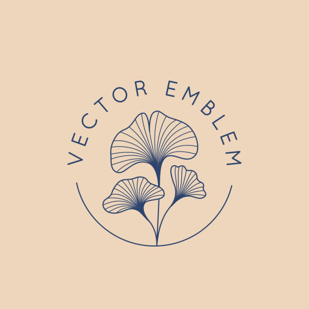 Vector abstract logo design template in trendy linear minimal style - ginkgo biloba leaves Vector abstract logo design template in trendy linear minimal style - ginkgo biloba leaves - abstract concept for organic food and cosmetics ginkgo stock illustrations