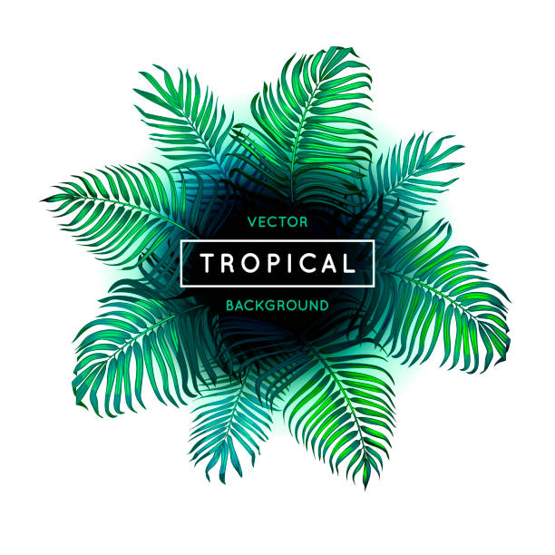 vector abstract tropical summer background with green foliage of exotic palm leaves and text lettering isolated on white. border. botanical illustration. jungle leaf and font. flyer. poster. eps 10. - jungle stock illustrations