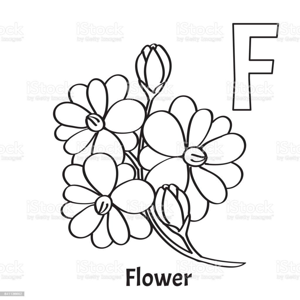 Coloriage Alphabet Fleur.Lettre Dalphabet Vecteur F Coloriage Fleur Vecteurs Libres De Droits