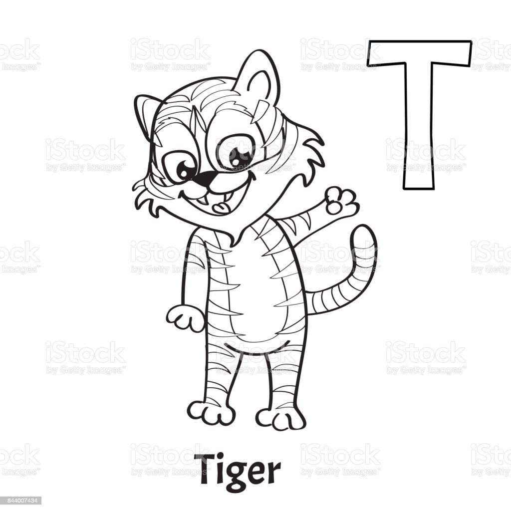 Vektor Alphabet Buchstaben T Malvorlagen Tiger Stock Vektor Art und ...