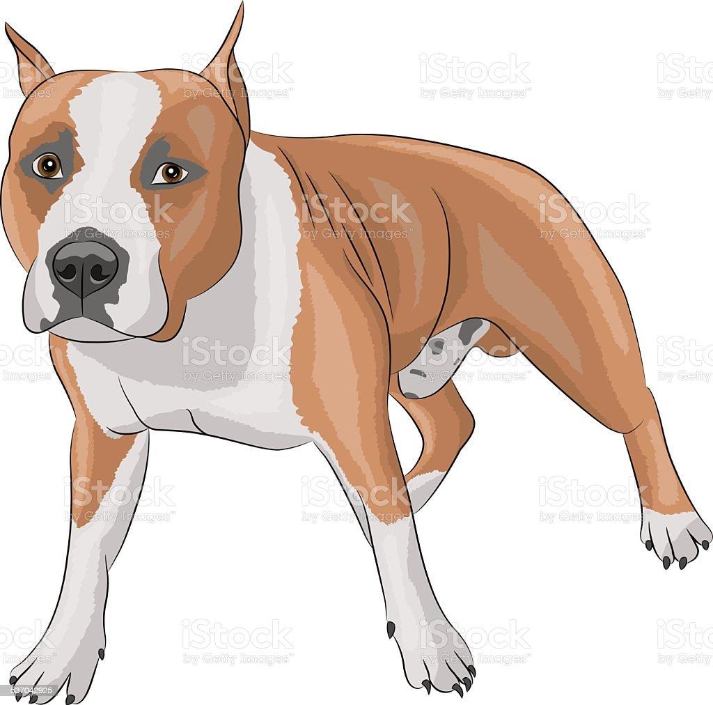 vector american staffordshire terrier vector art illustration