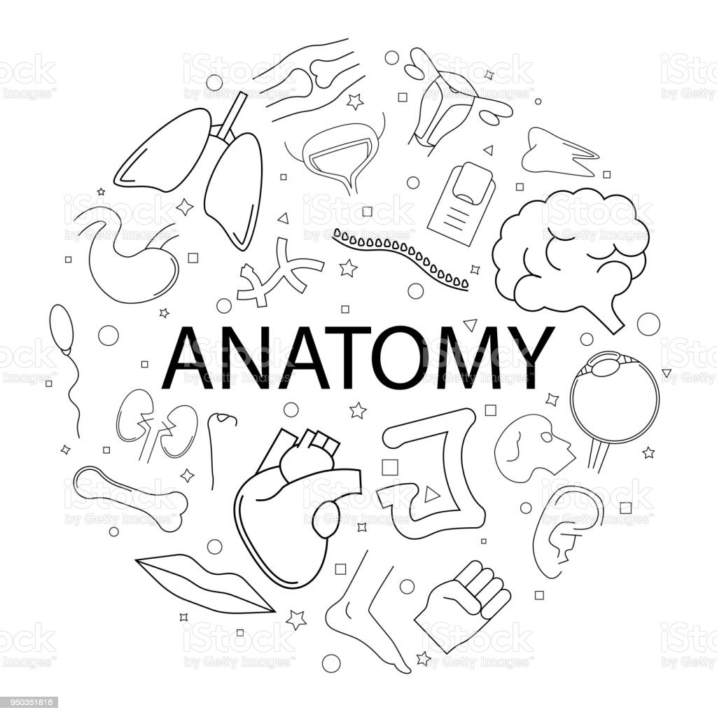 Vector Anatomy Pattern With Word Anatomy Background Stock Vector Art ...