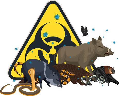 vector angry wild animal with coronavirus infection: pangolin, bat, pig, snake and biohazard sign
