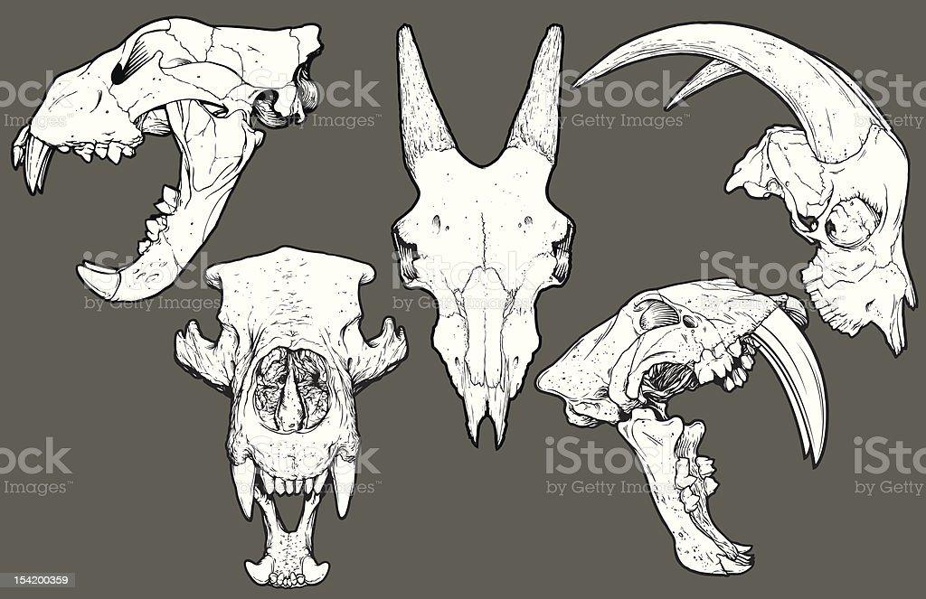 Vector Animal Skull Pack: Lion, Goat, Bear, Saber Tooth vector art illustration