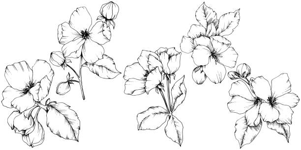 Vector Apple blossom floral botanical flower. Black and white engraved ink art. Isolated flowers illustration element. Vector Apple blossom floral botanical flower. Wild spring leaf wildflower isolated. Black and white engraved ink art. Isolated flowers illustration element on white background. apple blossom stock illustrations