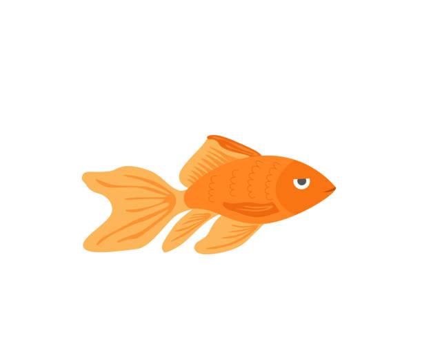 vector aquarium goldene fischsilhouette illustration. bunte cartoon-flaches aquarium meerestiere einfache ikone für ihr design - fischglas stock-grafiken, -clipart, -cartoons und -symbole